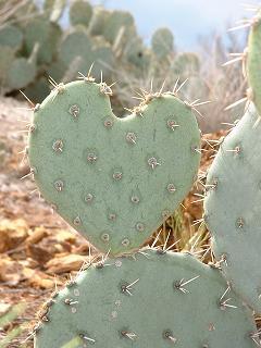 Soy un Cactus