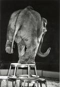 La rebeldia de un elefante